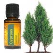 Esenciálny olej Cypress (cyprus) DoTerra